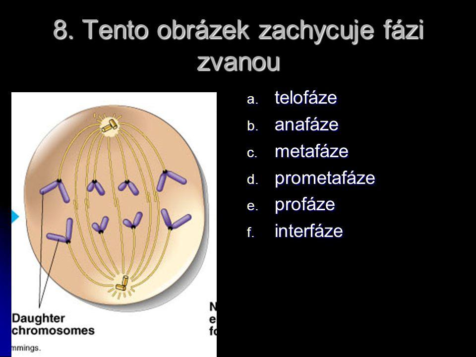 7. Následující popis se hodí nejlépe na: Jaderná membrána se začíná rozpadat; v oblasti centromery se objevuje struktura zvaná kinetochor; mikrotubuly