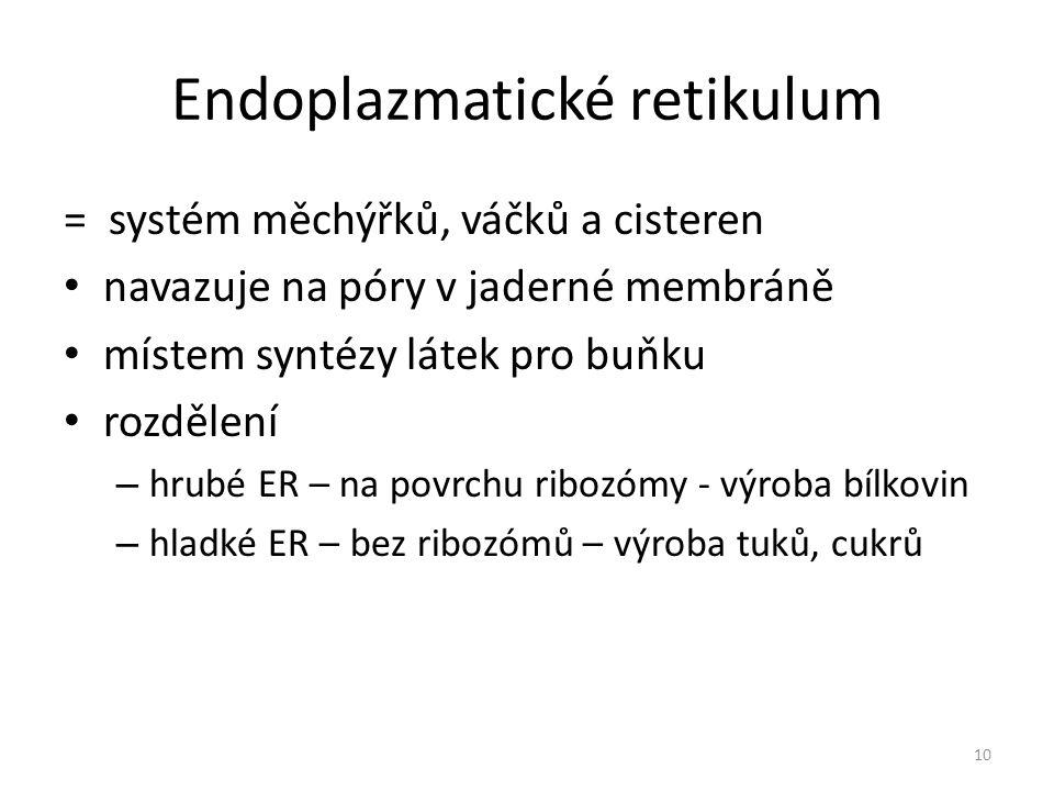 Endoplazmatické retikulum = systém měchýřků, váčků a cisteren navazuje na póry v jaderné membráně místem syntézy látek pro buňku rozdělení – hrubé ER – na povrchu ribozómy - výroba bílkovin – hladké ER – bez ribozómů – výroba tuků, cukrů 10