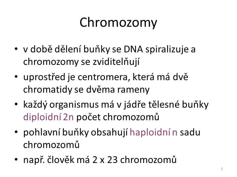 Membránové organely jádro semiautonomní: mají vlastní DNA – mitochondrie – plastidy – chloroplasty, chromoplasty, leukoplasty ostatní: – endoplazmatické retikulum – Golgiho systém – lyzozomy – vakuoly 6