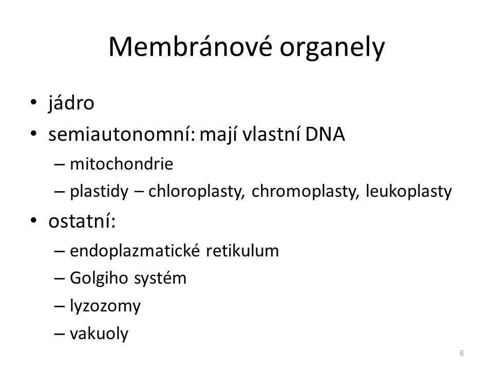 Mitochondrie tyčinkovité až vláknité organely v buňce několik set stavba – 2 biomembrány – jedna na povrchu – druhá zřasená uvnitř, tvoří záhyby – kristy – hmota uvnitř – matrix probíhá v ní buněčné dýchání – uvolňuje se energie za vzniku CO 2 a H 2 O 7