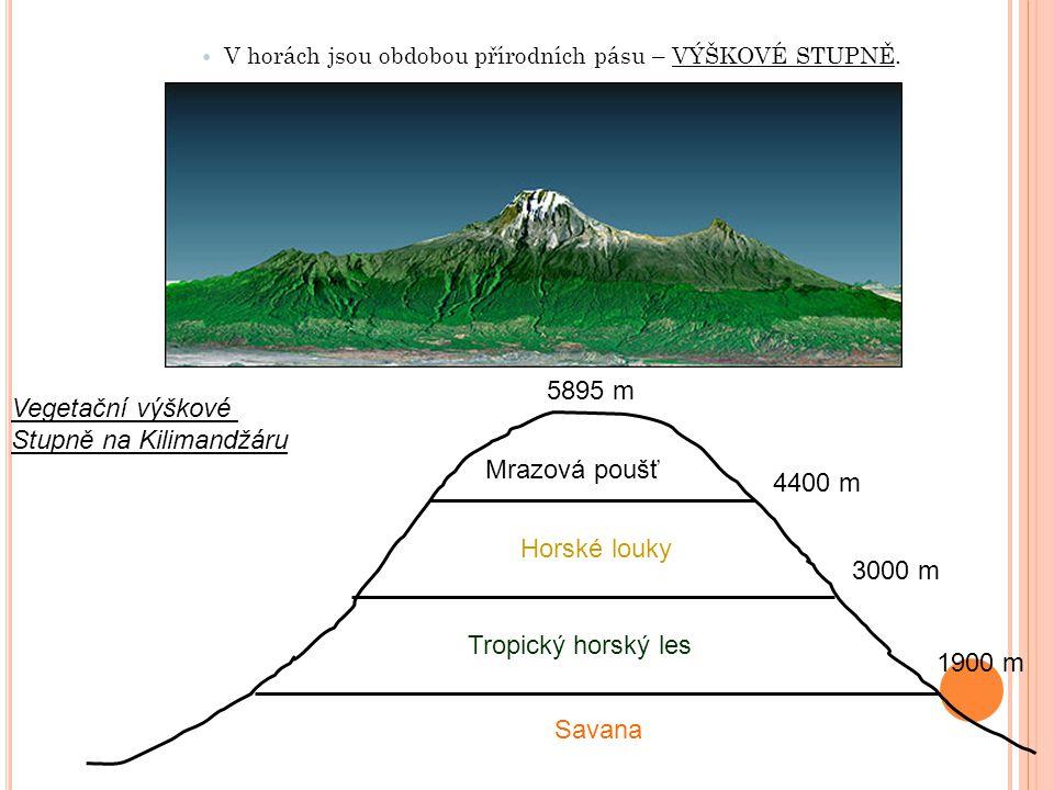 V horách jsou obdobou přírodních pásu – VÝŠKOVÉ STUPNĚ. Vegetační výškové Stupně na Kilimandžáru 5895 m 4400 m Mrazová poušť Horské louky 3000 m Tropi