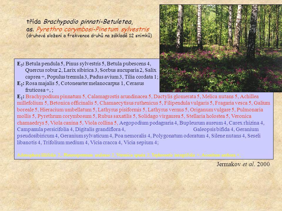 E 3 : Betula pendula 5, Pinus sylvestris 5, Betula pubescens 4, Quercus robur 2, Larix sibirica 3, Sorbus aucuparia 2, Salix caprea +, Populus tremula 3, Padus avium 3, Tilia cordata 1; E 2 : Rosa majalis 5, Cotoneaster melanocarpus 1, Cerasus fruticosa +, ; E 1 : Brachypodium pinnatum 5, Calamagrostis arundinacea 5, Dactylis glomerata 5, Melica nutans 5, Achillea millefolium 5, Betonica officinalis 5, Chamaecytisus ruthenicus 5, Filipendula vulgaris 5, Fragaria vesca 5, Galium boreale 5, Hieracium umbellatum 5, Lathyrus pisiformis 5, Lathyrus vernus 5, Origanum vulgare 5, Pulmonaria mollis 5, Pyrethrum corymbosum 5, Rubus saxatilis 5, Solidago virgaurea 5, Stellaria holostea 5, Veronica chamaedrys 5, Viola canina 5, Viola collina 5, Aegopodium podagraria 4, Bupleurum aureum 4, Carex rhizina 4, Campanula persicifolia 4, Digitalis grandiflora 4, Dracocephalum ruyschiana 4, Galeopsis bifida 4, Geranium pseudosibiricum 4, Geranium sylvaticum 4, Poa nemoralis 4, Polygonatum odoratum 4, Silene nutans 4, Seseli libanotis 4, Trifolium medium 4, Vicia cracca 4, Vicia sepium 4;Dracocephalum ruyschiana 4, Adenophora liliifolia 2,, Pleurospermum uralense 2, Veronica spuria 2, Tephroseris integrifolia +, Aconitum anthora +; třída Brachypodio pinnati-Betuletea, as.