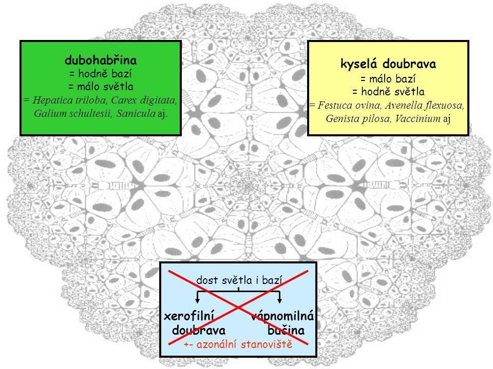 dost světla i bazí xerofilní vápnomilná doubrava bučina +- azonální stanoviště dubohabřina = hodně bazí = málo světla = Hepatica triloba, Carex digitata, Galium schultesii, Sanicula aj.
