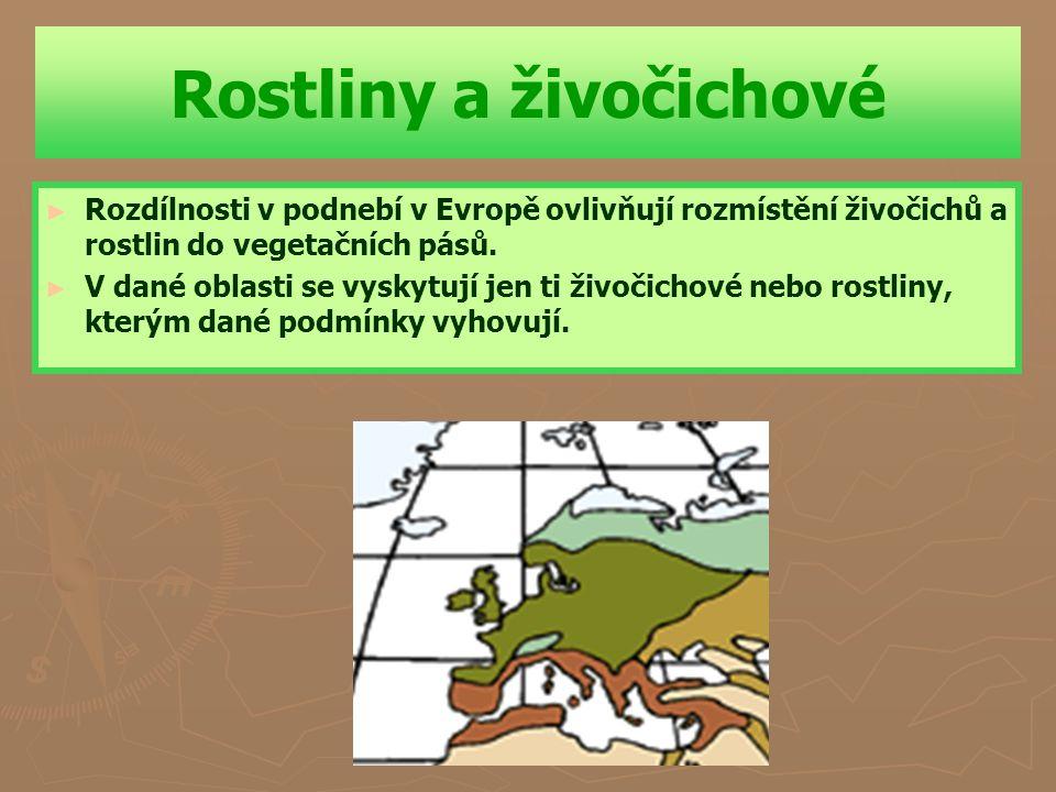Evropa – vegetace – vlastivěda 5.ročník ZŠ Použitý software: držitel licence – ZŠ J.