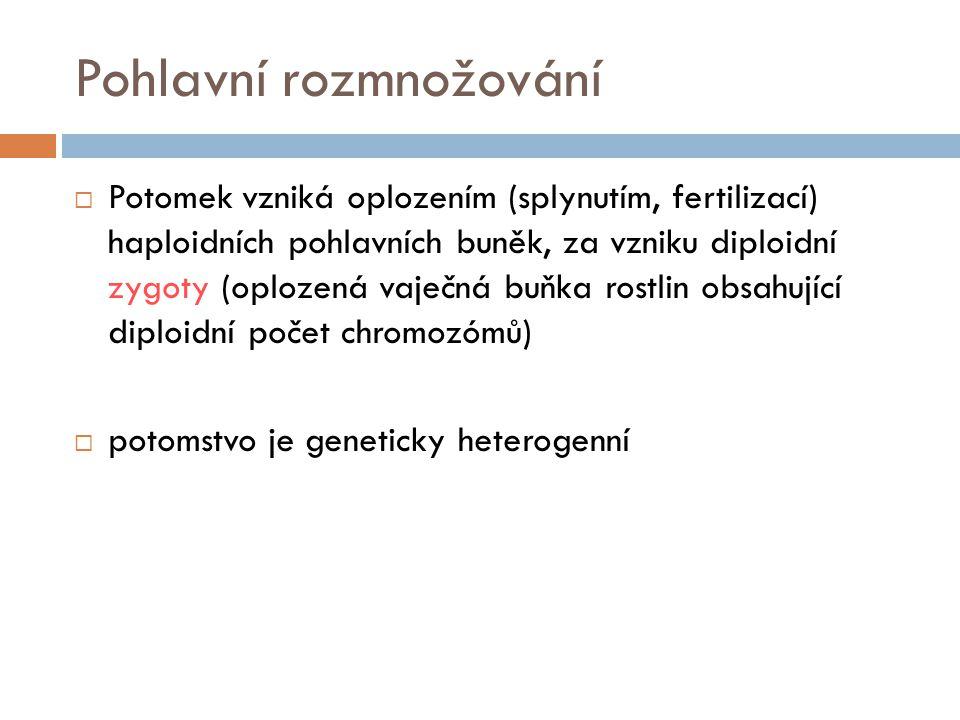 Pohlavní rozmnožování  Potomek vzniká oplozením (splynutím, fertilizací) haploidních pohlavních buněk, za vzniku diploidní zygoty (oplozená vaječná b