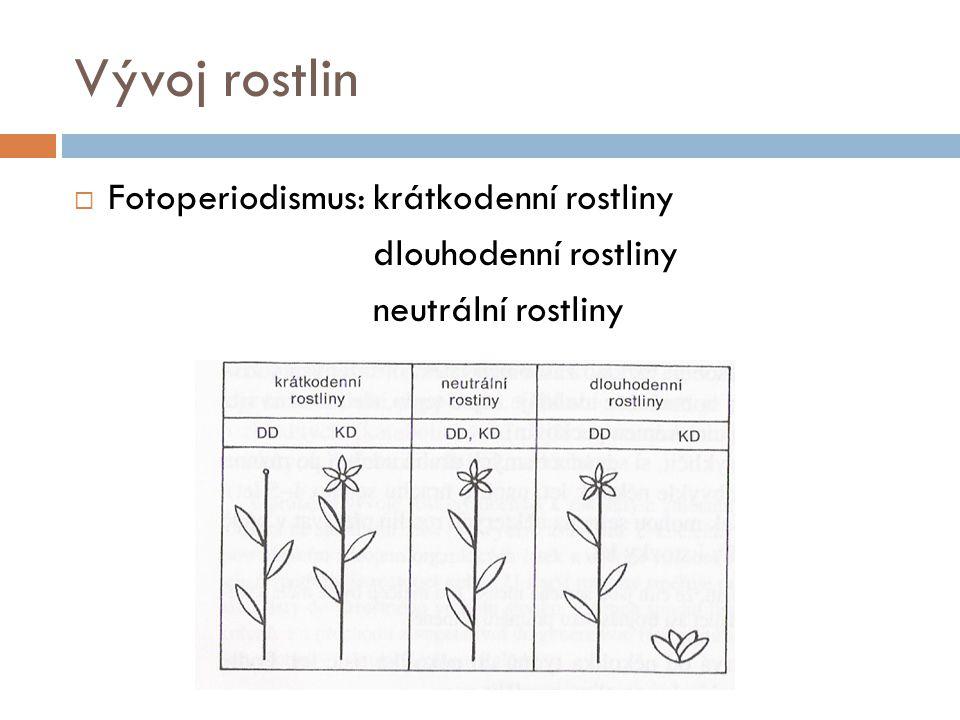 Vývoj rostlin  Fotoperiodismus: krátkodenní rostliny dlouhodenní rostliny neutrální rostliny