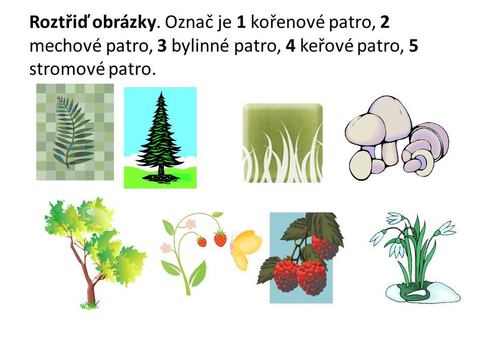 Roztřiď obrázky. Označ je 1 kořenové patro, 2 mechové patro, 3 bylinné patro, 4 keřové patro, 5 stromové patro.