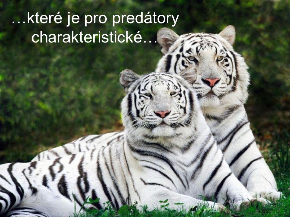 …které je pro predátory charakteristické…