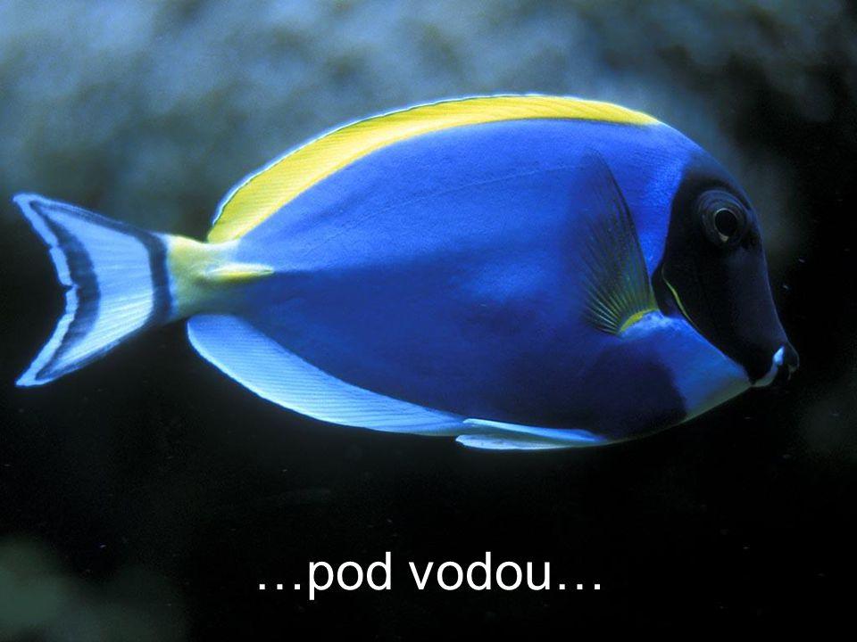 …pod vodou…
