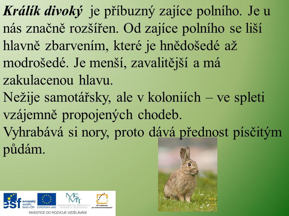 Králík divoký je příbuzný zajíce polního. Je u nás značně rozšířen. Od zajíce polního se liší hlavně zbarvením, které je hnědošedé až modrošedé. Je me