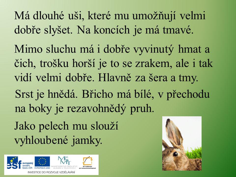 Potrava Zajíc je býložravec.Jeho potrava je velmi pestrá, přijímá ji jak na poli, tak v lese.