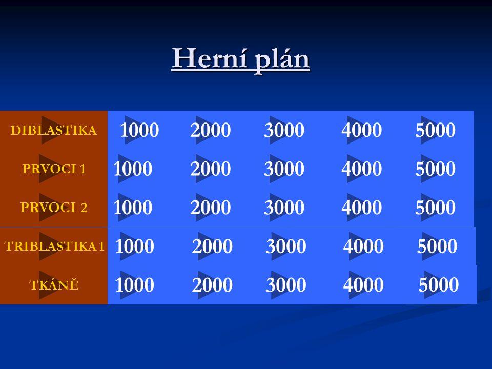 Herní plán DIBLASTIKA 2000 50004000 5000 30001000 40003000 2000 PRVOCI 1 20004000 1000 5000 40002000 100030005000 3000 2000300010004000 PRVOCI 2 TRIBL