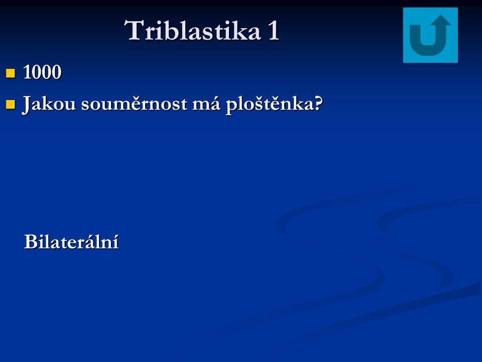 Triblastika 1 Triblastika 1 1000 1000 Jakou souměrnost má ploštěnka? Jakou souměrnost má ploštěnka? Bilaterální
