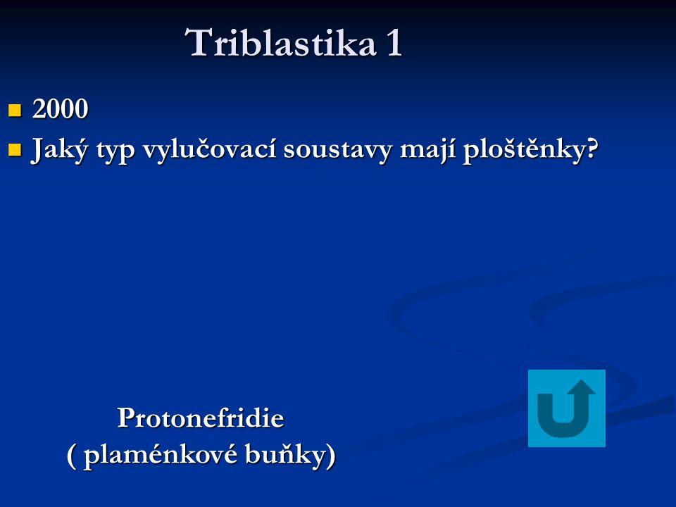 Triblastika 1 Triblastika 1 2000 2000 Jaký typ vylučovací soustavy mají ploštěnky? Jaký typ vylučovací soustavy mají ploštěnky? Protonefridie ( plamén