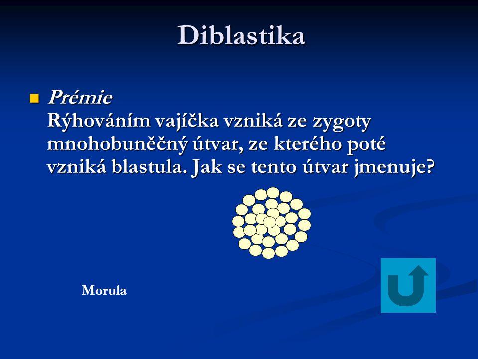 Diblastika Diblastika Prémie Rýhováním vajíčka vzniká ze zygoty mnohobuněčný útvar, ze kterého poté vzniká blastula. Jak se tento útvar jmenuje? Prémi