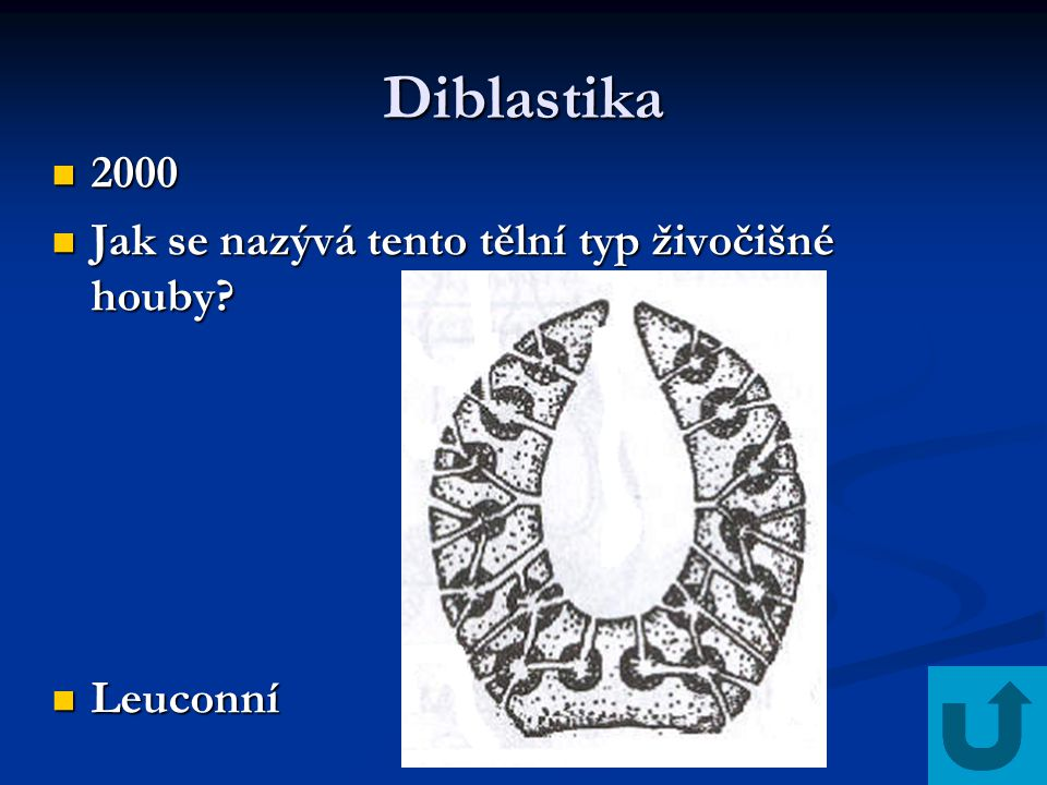 Diblastika 2000 2000 Jak se nazývá tento tělní typ živočišné houby? Jak se nazývá tento tělní typ živočišné houby? Leuconní Leuconní