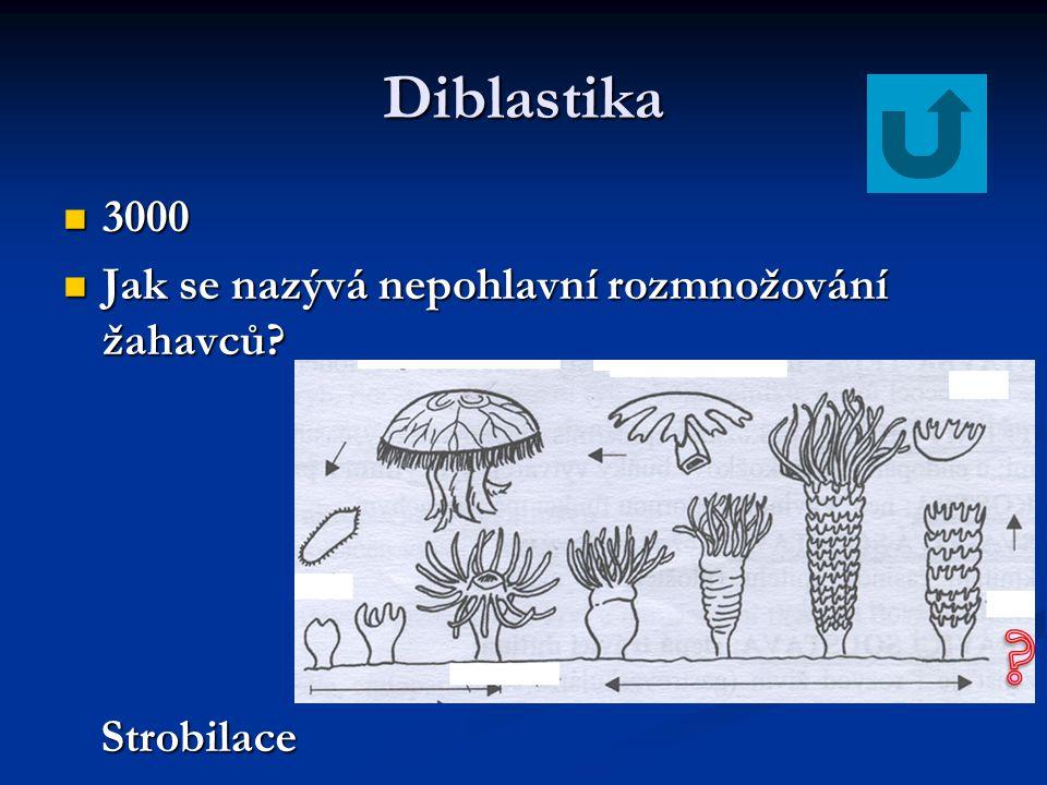 Diblastika 3000 3000 Jak se nazývá nepohlavní rozmnožování žahavců? Jak se nazývá nepohlavní rozmnožování žahavců? Strobilace