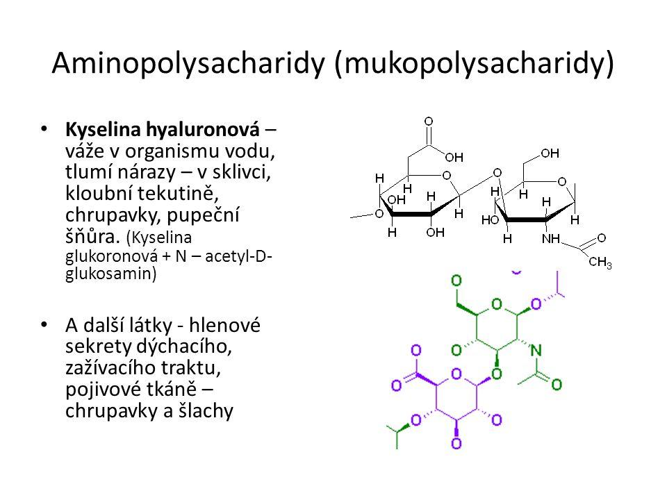 Aminopolysacharidy (mukopolysacharidy) Kyselina hyaluronová – váže v organismu vodu, tlumí nárazy – v sklivci, kloubní tekutině, chrupavky, pupeční šňůra.