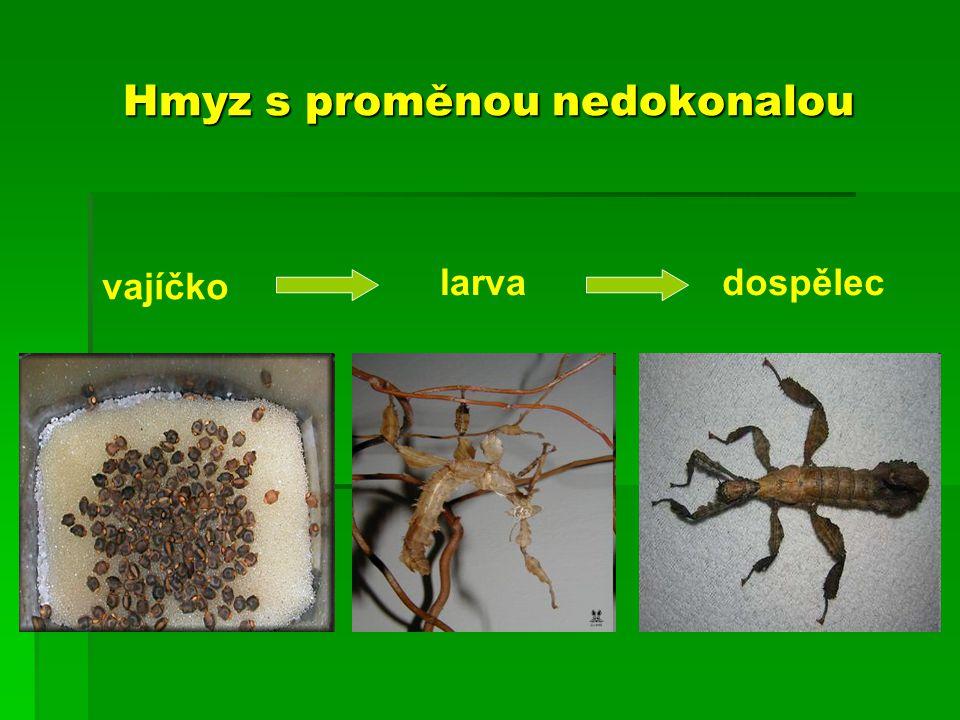 Hmyz s proměnou nedokonalou vajíčko larvadospělec