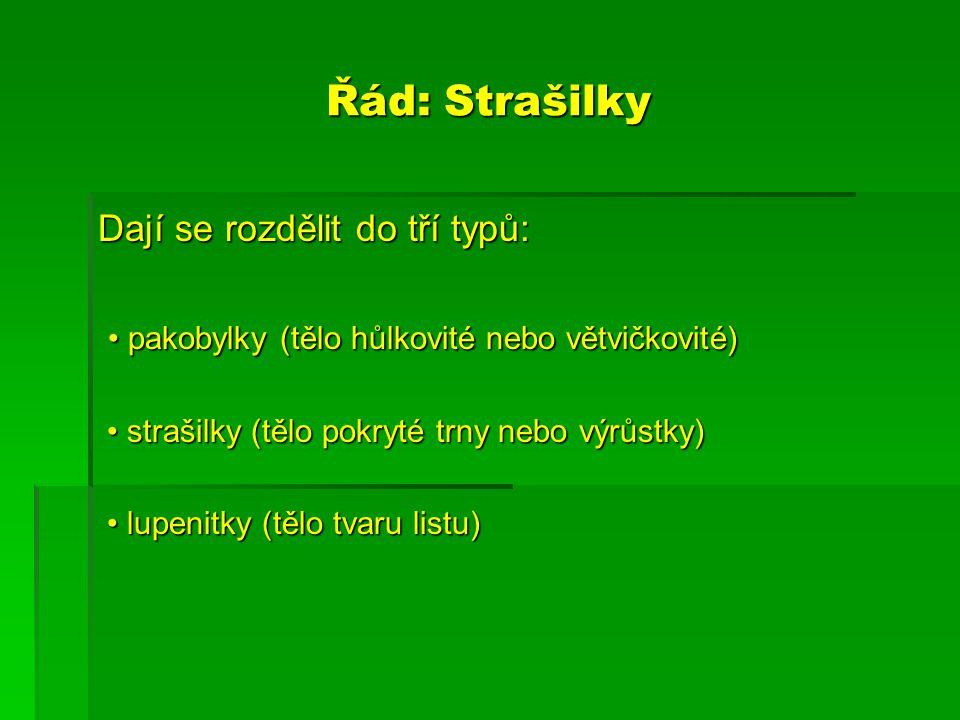 Řád: Strašilky Dají se rozdělit do tří typů: pakobylky (tělo hůlkovité nebo větvičkovité) pakobylky (tělo hůlkovité nebo větvičkovité) strašilky (tělo