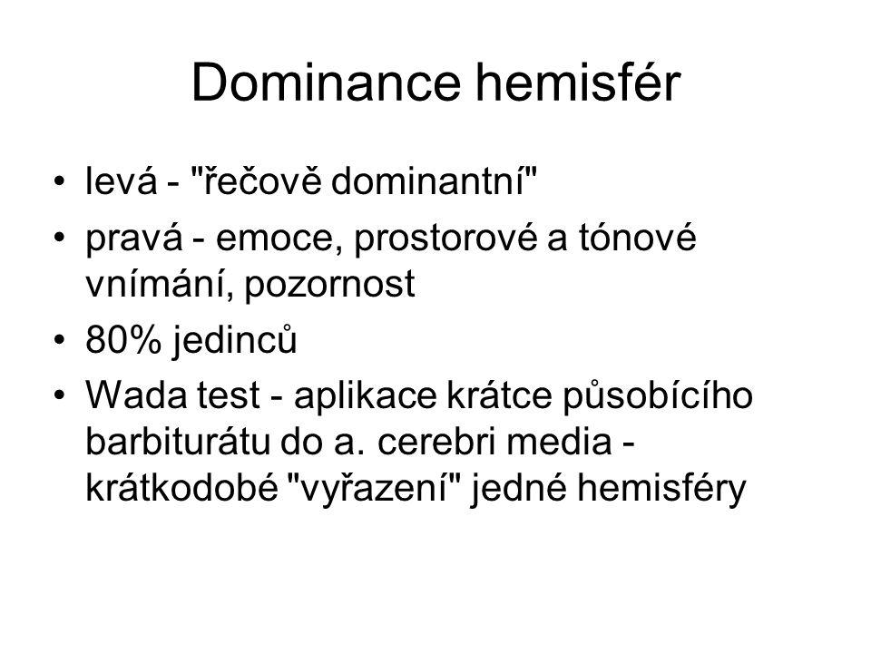 Dominance hemisfér levá -