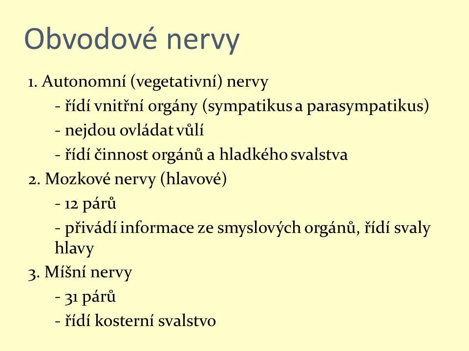 Obvodové nervy 1. Autonomní (vegetativní) nervy - řídí vnitřní orgány (sympatikus a parasympatikus) - nejdou ovládat vůlí - řídí činnost orgánů a hlad