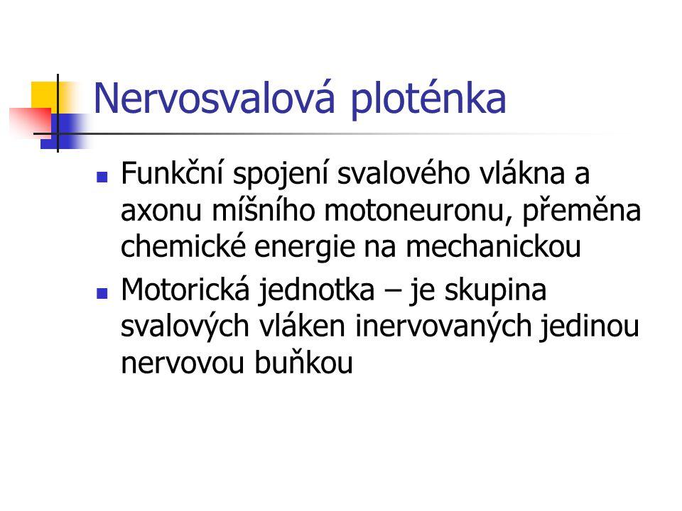 Nervosvalová ploténka Funkční spojení svalového vlákna a axonu míšního motoneuronu, přeměna chemické energie na mechanickou Motorická jednotka – je skupina svalových vláken inervovaných jedinou nervovou buňkou