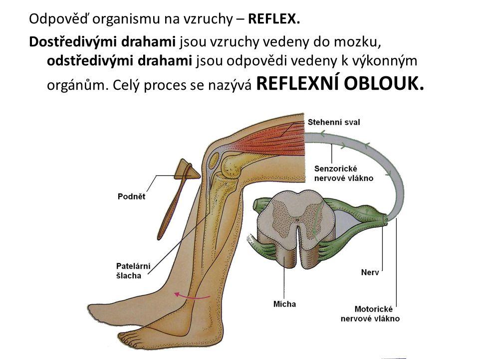 Odpověď organismu na vzruchy – REFLEX.