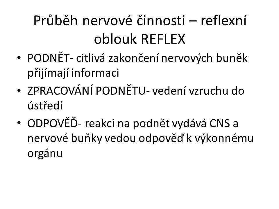 Průběh nervové činnosti – reflexní oblouk REFLEX PODNĚT- citlivá zakončení nervových buněk přijímají informaci ZPRACOVÁNÍ PODNĚTU- vedení vzruchu do ústředí ODPOVĚĎ- reakci na podnět vydává CNS a nervové buňky vedou odpověď k výkonnému orgánu
