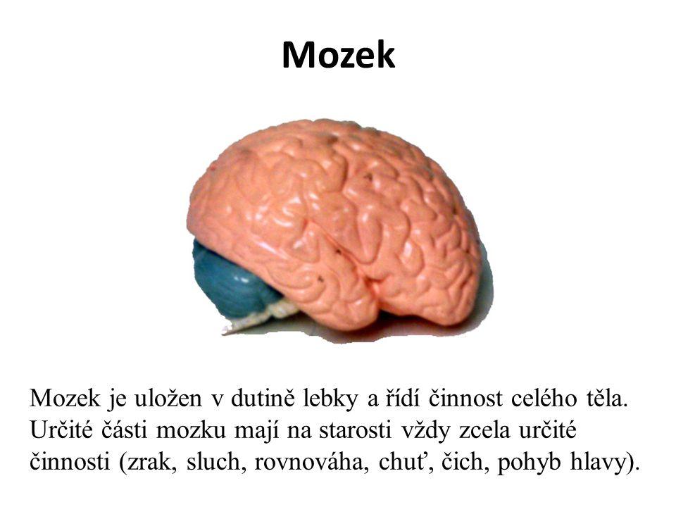 Mozek Mozek je uložen v dutině lebky a řídí činnost celého těla.