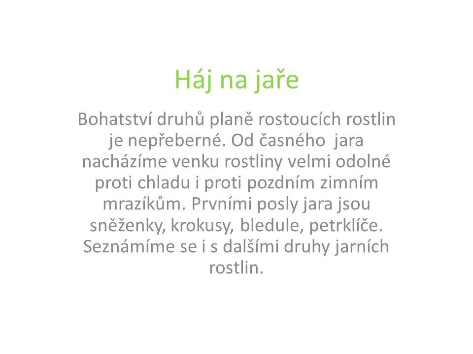 Sasanka hajní Popis: Asi 20 cm vysoká vytrvalá bylina.