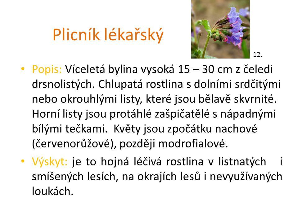 Plicník lékařský Popis: Víceletá bylina vysoká 15 – 30 cm z čeledi drsnolistých. Chlupatá rostlina s dolními srdčitými nebo okrouhlými listy, které js