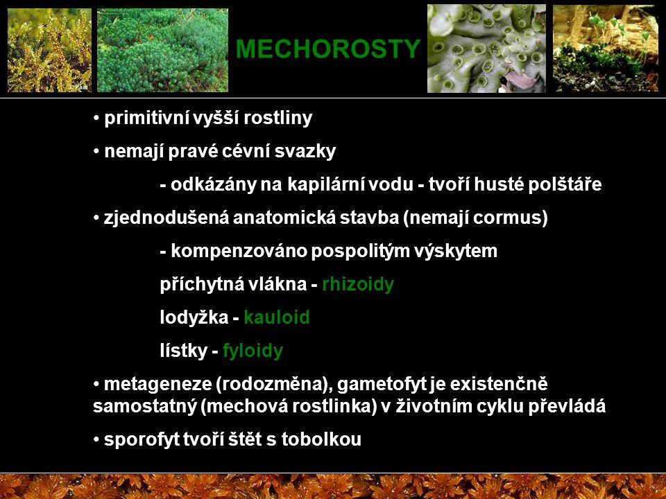 MECHOROSTY primitivní vyšší rostliny nemají pravé cévní svazky - odkázány na kapilární vodu - tvoří husté polštáře zjednodušená anatomická stavba (nem