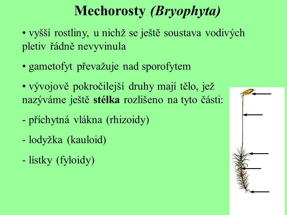 vyšší rostliny, u nichž se ještě soustava vodivých pletiv řádně nevyvinula gametofyt převažuje nad sporofytem vývojově pokročilejší druhy mají tělo, j