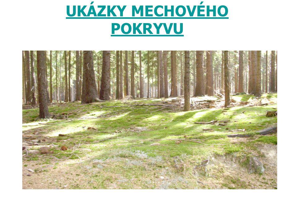 UKÁZKY MECHOVÉHO POKRYVU