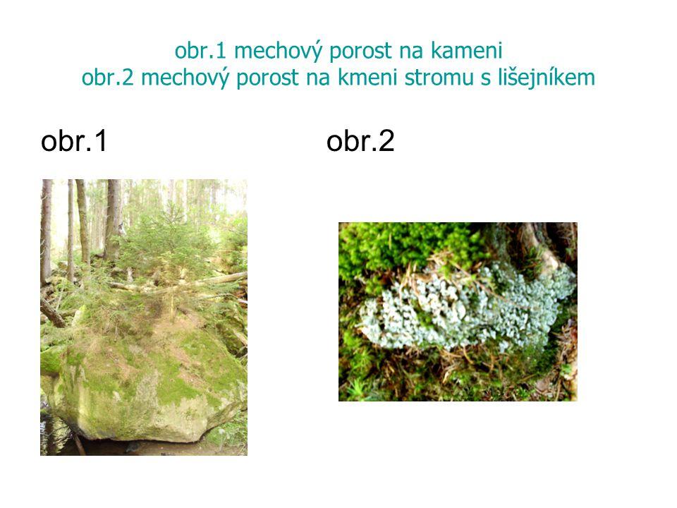 obr.1 mechový porost na kameni obr.2 mechový porost na kmeni stromu s lišejníkem obr.1 obr.2