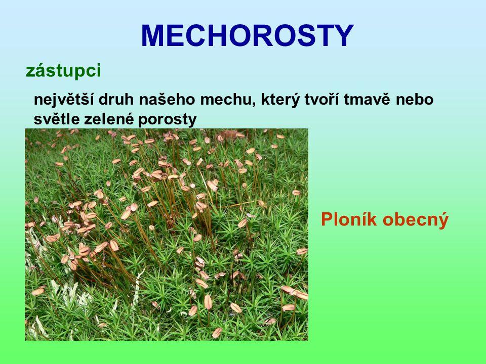 MECHOROSTY zástupci největší druh našeho mechu, který tvoří tmavě nebo světle zelené porosty Ploník obecný