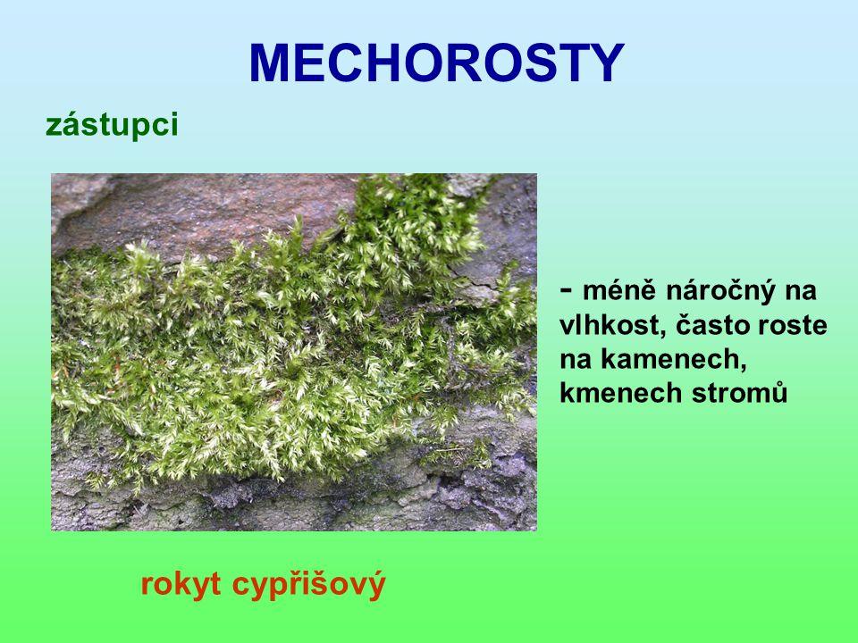 MECHOROSTY zástupci rokyt cypřišový - m éně náročný na vlhkost, často roste na kamenech, kmenech stromů