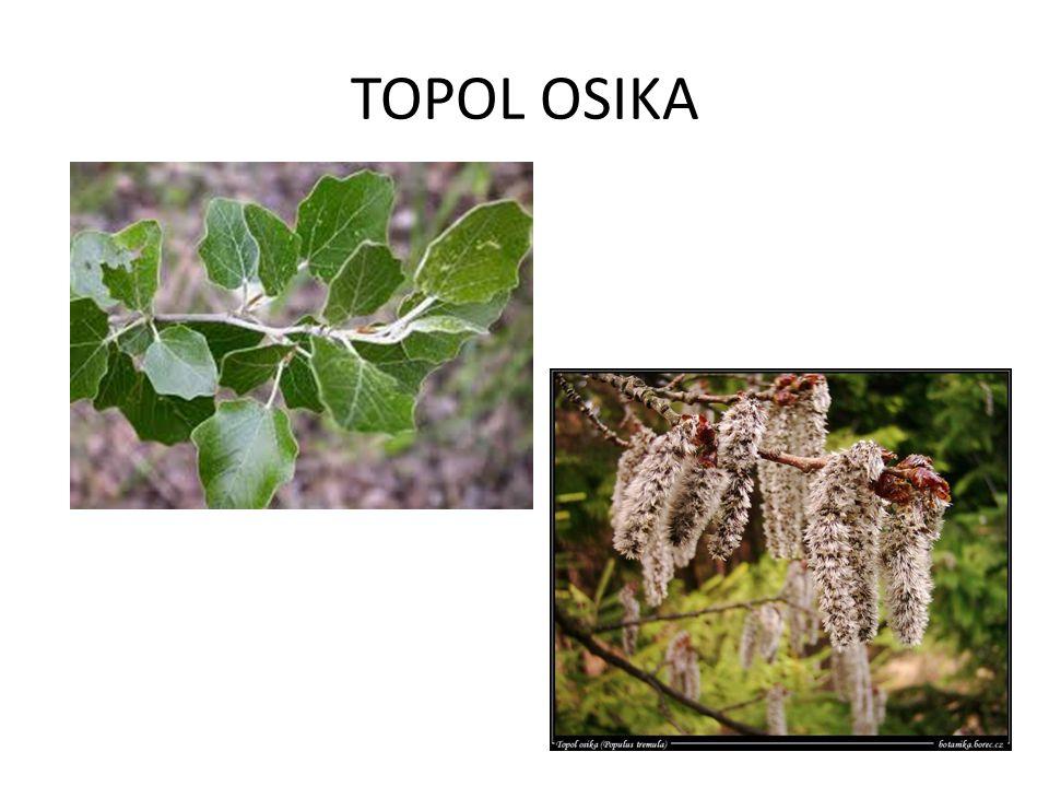 TOPOL OSIKA