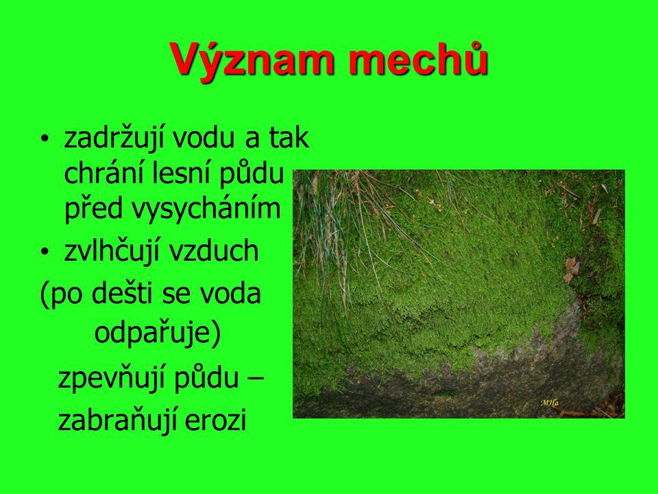 Význam mechů zadržují vodu a tak chrání lesní půdu před vysycháním zvlhčují vzduch (po dešti se voda odpařuje) zpevňují půdu – zabraňují erozi