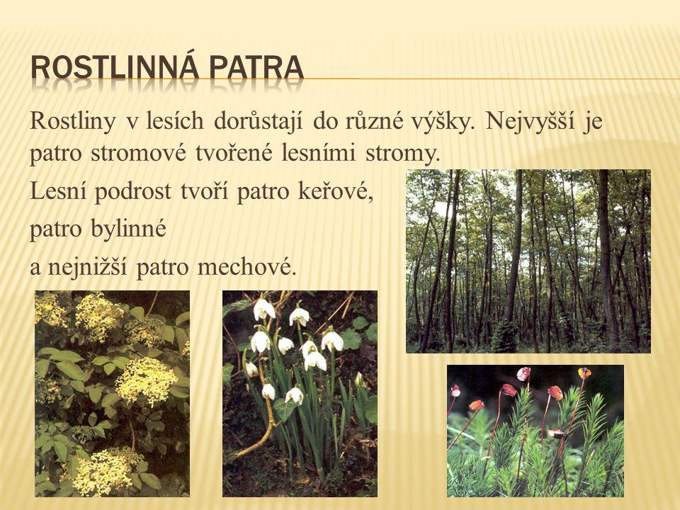 Rostliny v lesích dorůstají do různé výšky.Nejvyšší je patro stromové tvořené lesními stromy.