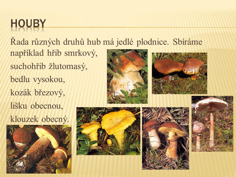 Řada různých druhů hub má jedlé plodnice.