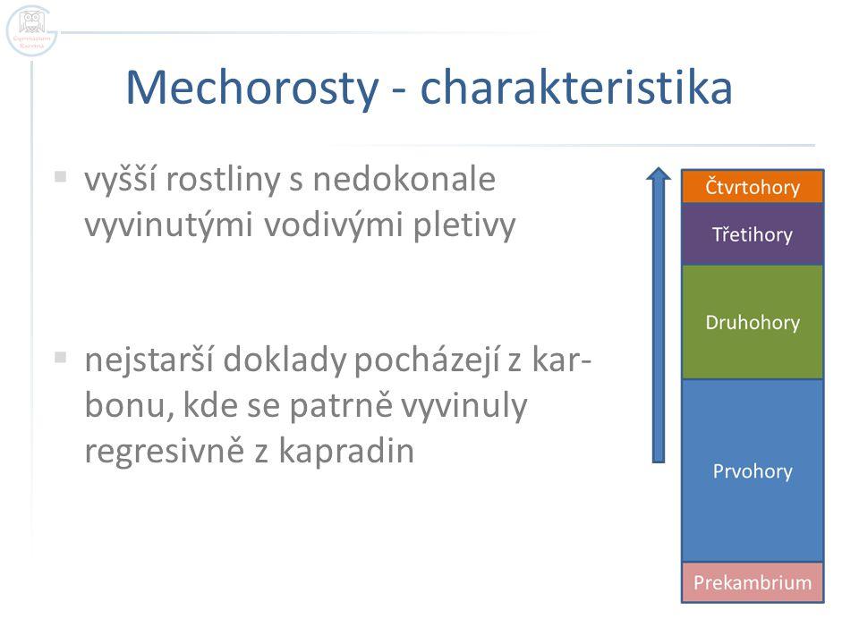 Mechorosty - charakteristika  vyšší rostliny s nedokonale vyvinutými vodivými pletivy  nejstarší doklady pocházejí z kar- bonu, kde se patrně vyvinu