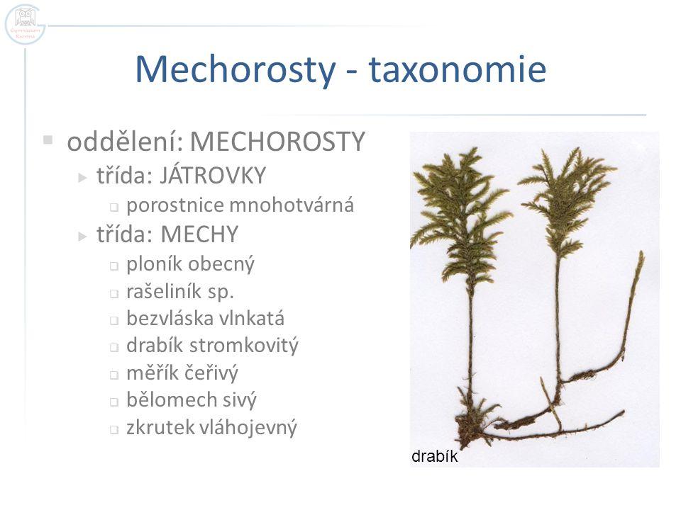 Mechorosty - taxonomie  oddělení: MECHOROSTY  třída: JÁTROVKY  porostnice mnohotvárná  třída: MECHY  ploník obecný  rašeliník sp.  bezvláska vl