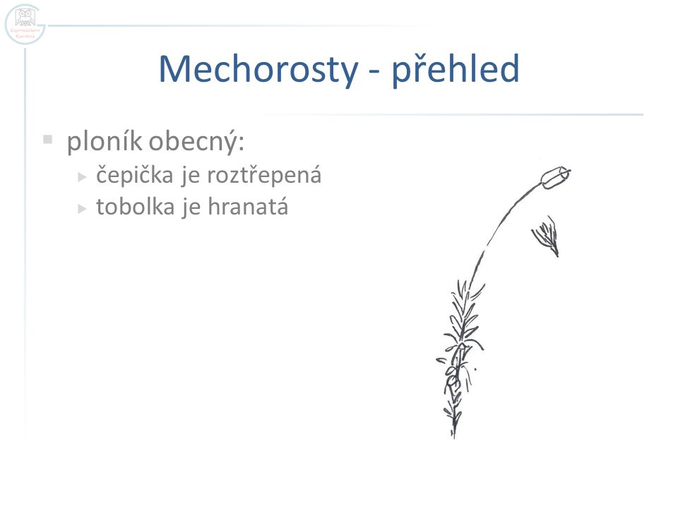 Mechorosty - přehled  ploník obecný:  čepička je roztřepená  tobolka je hranatá
