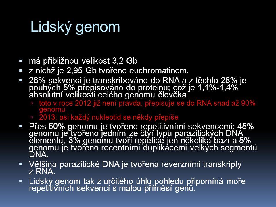Lidský genom  má přibližnou velikost 3,2 Gb  z nichž je 2,95 Gb tvořeno euchromatinem.  28% sekvencí je transkribováno do RNA a z těchto 28% je pou