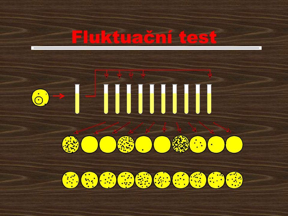 Fluktuační test