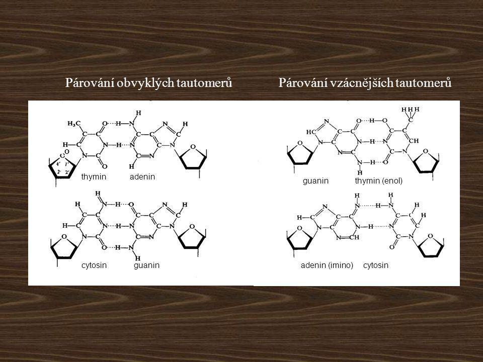 thyminadenin cytosinguanincytosin guanin adenin (imino) thymin (enol) O Párování obvyklých tautomerůPárování vzácnějších tautomerů