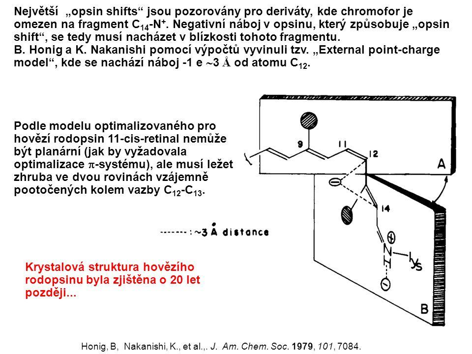 """Největší """"opsin shifts"""" jsou pozorovány pro deriváty, kde chromofor je omezen na fragment C 14 -N +. Negativní náboj v opsinu, který způsobuje """"opsin"""
