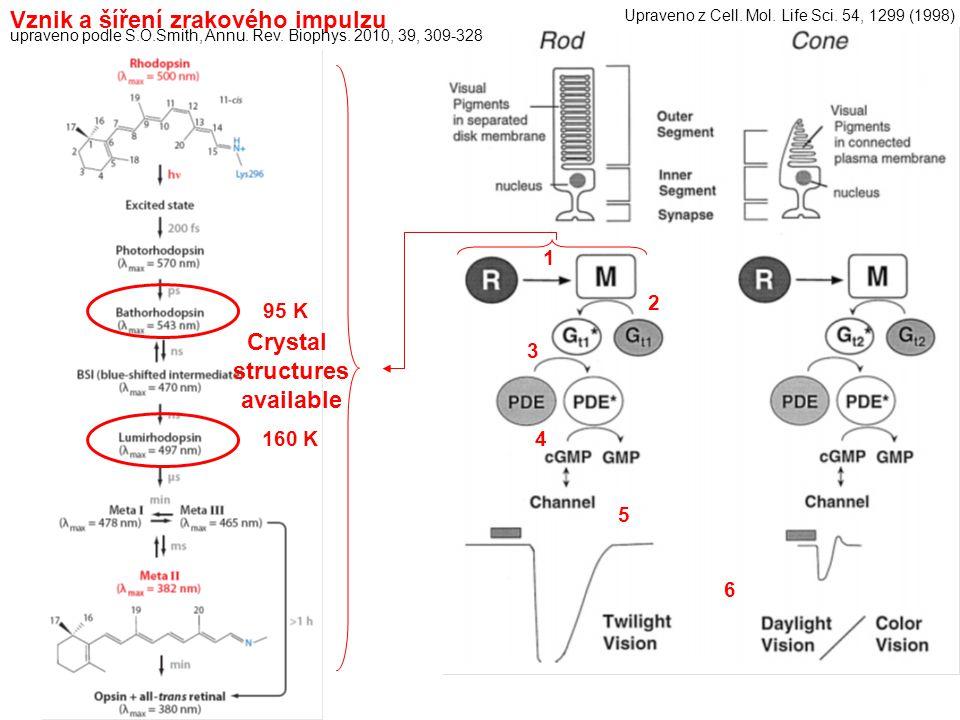 Vznik a šíření zrakového impulzu 1 2 3 4 5 6 upraveno podle S.O.Smith, Annu. Rev. Biophys. 2010, 39, 309-328 Upraveno z Cell. Mol. Life Sci. 54, 1299